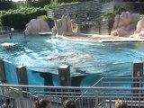 Zoo Amnéville-Otaries (2)