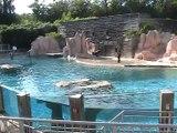 Zoo Amnéville-Otaries (3)