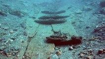 L'extraordinaire histoire de l'épave romaine Port-Vendres-1