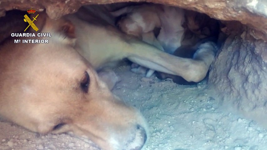 TERRIBLE! En Murcia entierran vivos a 9 CACHORROS de perro, sólo consiguen rescatar a 2
