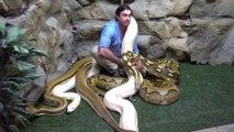 Il s'amuse avec ses 3 énormes serpents... Dingue