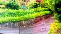 Nature Sounds On A Rainy Day