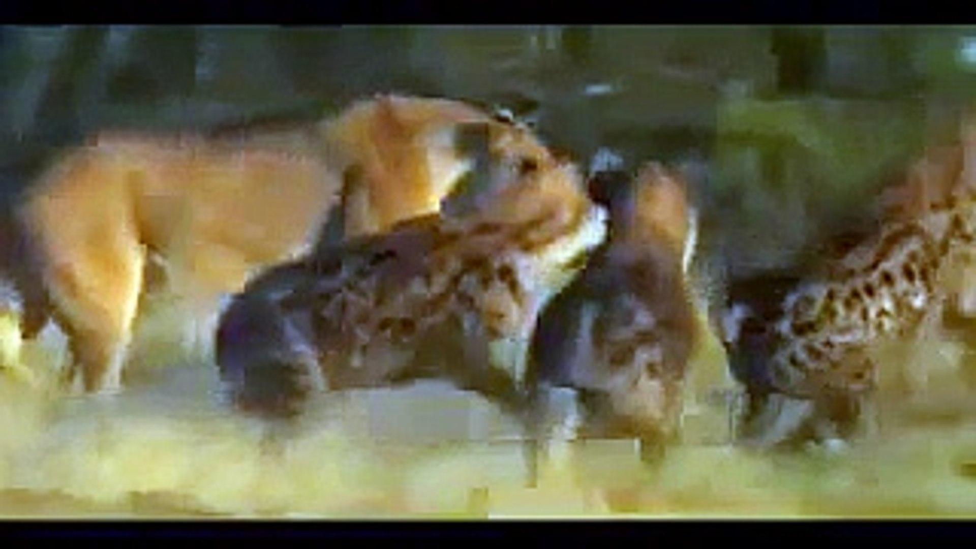 مقاطع مشوقة ومذهلة - للحيوانات حيوانات ذكية - اقوى الحيوانات المفترسة