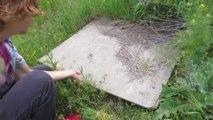 Devinez ce qui se trouve sous cette planche de bois... Terrifiant !!!