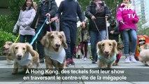 """Des teckels au premier """"défilé de saucisses"""" de Hong Kong"""
