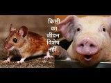 किसी का जीवन विशेष नहीं Kisi Ka Jeevan Vishesh Nahi