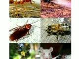 Pest Control ,  Termite Control ,  Rodent Control ,  Indian Pest Control  ,  Mosquito Control