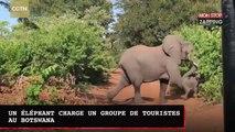 Un éléphant attaque un groupe de touristes au Botswana (vidéo)