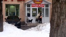 Quand un chien russe se transforme en braqueur de mamies