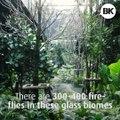 Watch Fireflies in the Heart of Bangkok