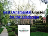 Types of Ornamental Grasses - Foliage Plants for Landscaping