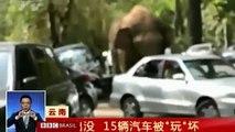 De coração partido, elefante descarrega raiva e destrói carros na China