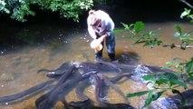 Cette femme nourrit des dizaines d'anguilles géantes
