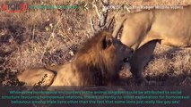THE TOP 10 || Top 10 Gay Animals In The World || Gay Lion, Gay Dolphin, Gay Bonobo,...