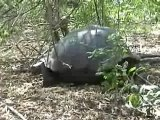 Galapagos Islands travel: Giant Tortoise