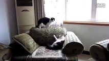 funny_cats,funny_animals,funny_video,cute_kittens,kittens,cats,funny_cat