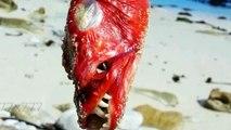 Voici une compilation de poissons mutants les plus terrifiants au monde