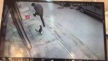 Un chat fait un croche-pied à un homme qui passe juste devant lui.