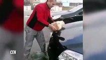 Il trempe son chat dans un seau d'eau, puis nettoie sa voiture en utilisant son animal comme un torchon
