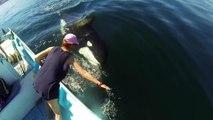 Cette femme caresse une orque sauvage en pleine mer... Magnifique
