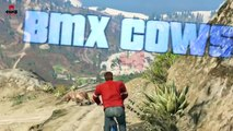 BMX COWS MOD in GTA 5 Online   EPIC Insane Cow Map   Mad Cows Riding Bikes!!   GTA 5 Funny Moments