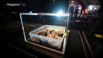 Grasa, aceite y productos sanitarios van de las cloacas al Museo de Londres