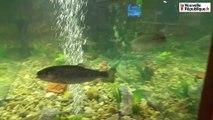 VIDEO(36). Salon de la pêche : du poisson, du poisson, du poisson !