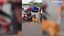 Dog Jumps Onto Motorbike