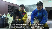 Séisme à Taïwan: un labrador héro des recherches de survivants