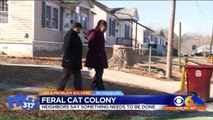 'Fighting' Feral Cat Colony is Taking Over Virginia Neighborhood, Residents Says