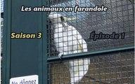 Les animaux en farandole: saison 3: épisode 1