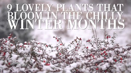9 Lovely Plants That Bloom In The Chilly Winter Months