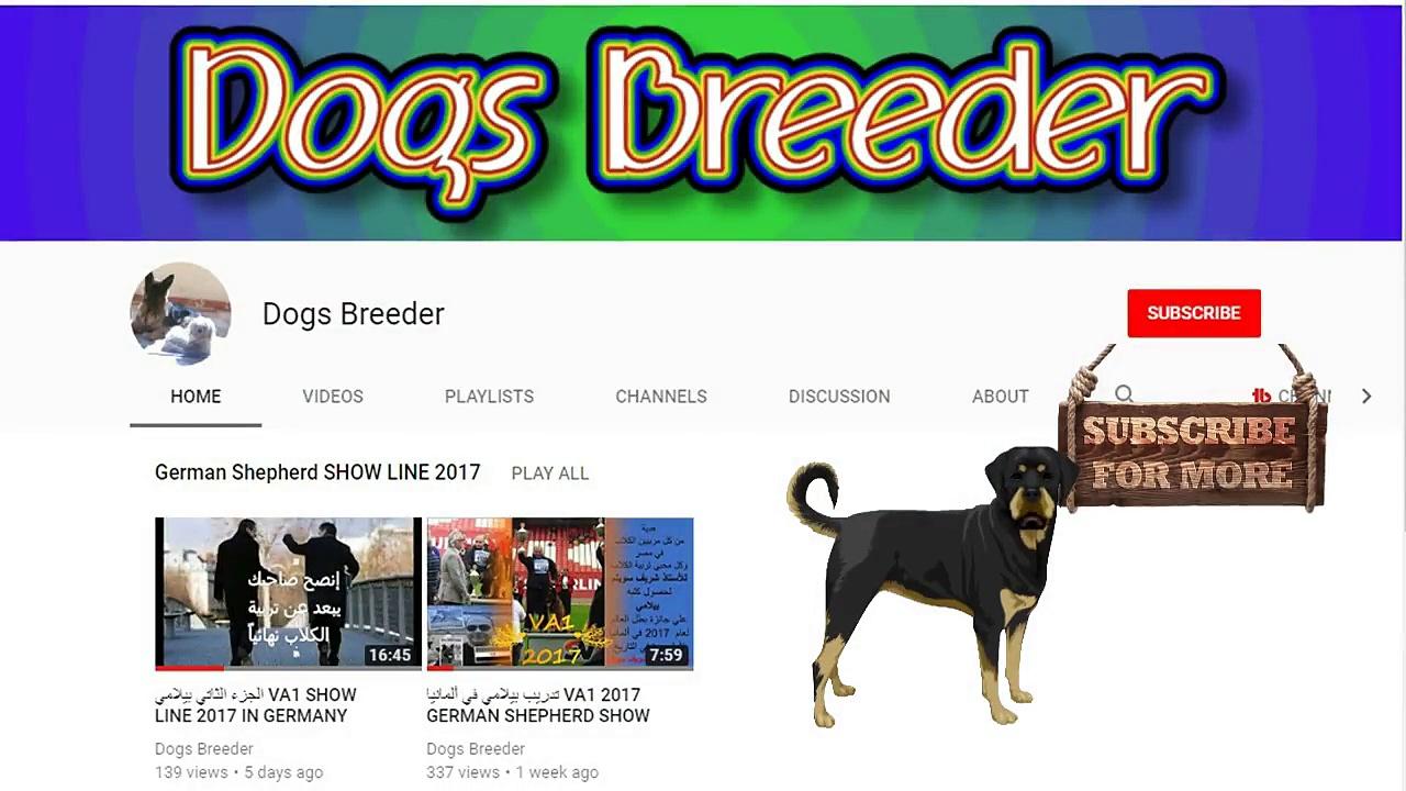 top 10 dog dancing hot dog-dog breeds -funny dogs -notice dog face