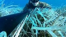 Spearfishing in the Aeolian Islands 2017