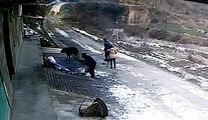 ایک وحشی جانور نےایک ادمی اور ایک لڑکی کے ساتھ کیا کیا  ویڈیو دیکھیں