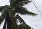 Trees Sway in Tonga as Winds Pick Up With Approach of Cyclone