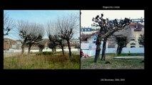 Innover pour conserver: Méthodes de diagnostic et décision de gestion des arbres dans les sites patrimoniaux