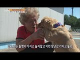 [Live Tonight] 생방송 오늘저녁 207회 - Twenty-four seven stone!  'the dog'  fell in love with stone 20150910