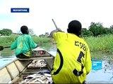 FRANCE 24 Environnement - ENVIRONNEMENT - Le lac Tchad, en voie de disparition ?
