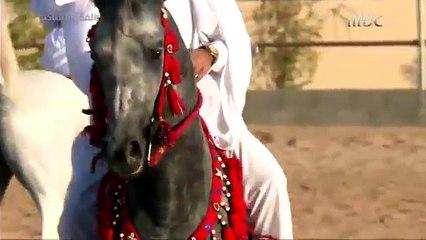 تربية الخيول العربية الأصيلة في نجران.. عشق يتوارثه الأجيال