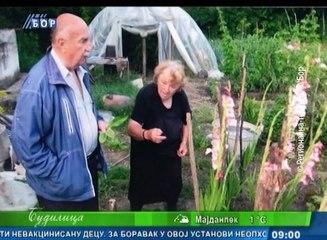 Budilica gostovanje (prim. dr Petar Paunović), 13. februar 2018. (RTV Bor)