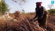 Ethiopie : sauver les forêts