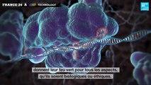 La modification génétique au secours de la santé - CRISPR : La nouvelle frontière de la génétique
