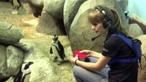 Penguins on Valentine's Day will melt your heart!