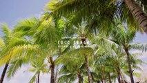 DJ Sava feat.Olga - Coco Bongo (Dj Dark & MD Dj Remix)