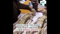 Συνέβη κι αυτό!!!Ανθρωποειδή δίποδα σώματα με ερπετόμορφα κεφάλια  ξεθάφτηκαν στη Nazca!!!!