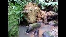 Island of Iriomote 西表島 Dschungel mit Wasserfällen oder mit dem Kayak nach Tokyo