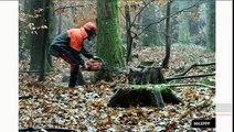 """""""Climat : l'enjeu de la certification des forêts pour le CO2"""" (Planète Environnement)"""