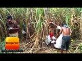 बस्ती  गन्ने के खेत में मिला युवक का शव, पहचान नहीं II Gorakhpur Hindi News - Hindustan