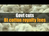 Govt cuts Bt cotton royalty fees by 74%